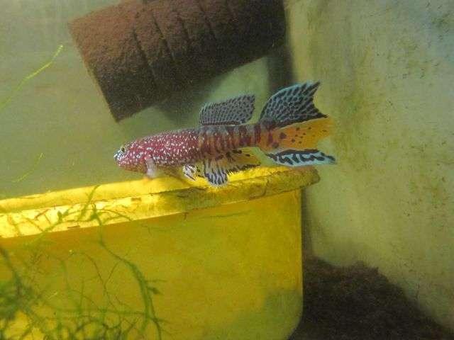 aquabidcom archived auction fwkillifishe1323617590