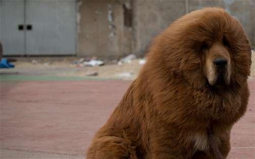 Zoológico disfrazaba a perros de leones